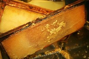 méhpempő.com