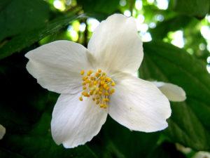Homeopátiás gyógyszerek és alkalmazásuk